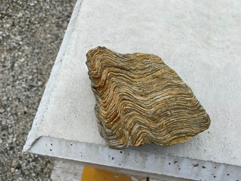 写真の岩石の名前を教えてください. 四国山地で見つけました.片麻岩と思うのですが?
