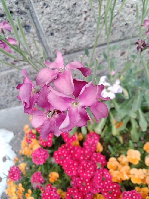 この花の名前も教えてください。