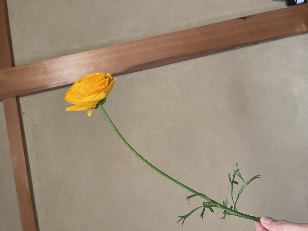この花のなまは何ですか?