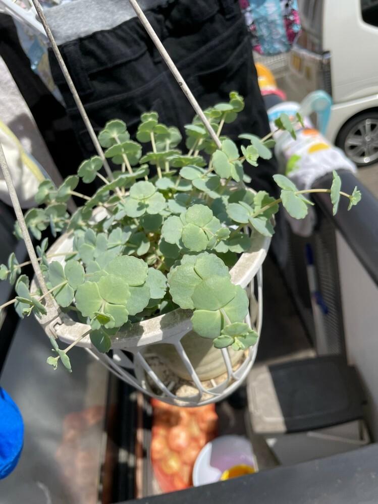 この植物は何ですか??
