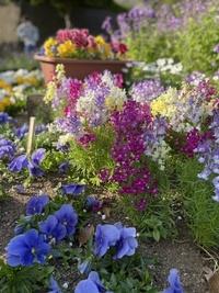 花の名前を教えてください。  お散歩中に、とても綺麗な花を見かけました。 色々と私なりに頑張ってこの花が何か調べたのですが探せず。。 名前が分かれば嬉しいです。^_^  ※写真の真ん中にあるカラフルなお...