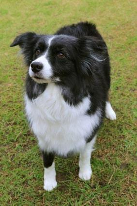 オスの洋犬は飼い主が女だと、日本の男よりも、愛情表現が豊かなのは何故だと思いますか?