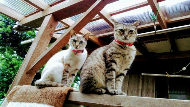 どちらの猫が好きですか?