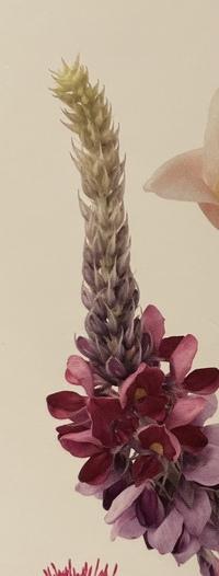 花の名前について質問です。 小学館の図鑑neo花の表紙にも載っている、この花の名前はなんと言うのでしょうか? 本の中からも見つけられません。