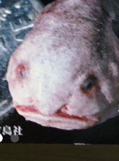 ★大喜利★ この画像に一言!! 魚はニュウドウカジカです。