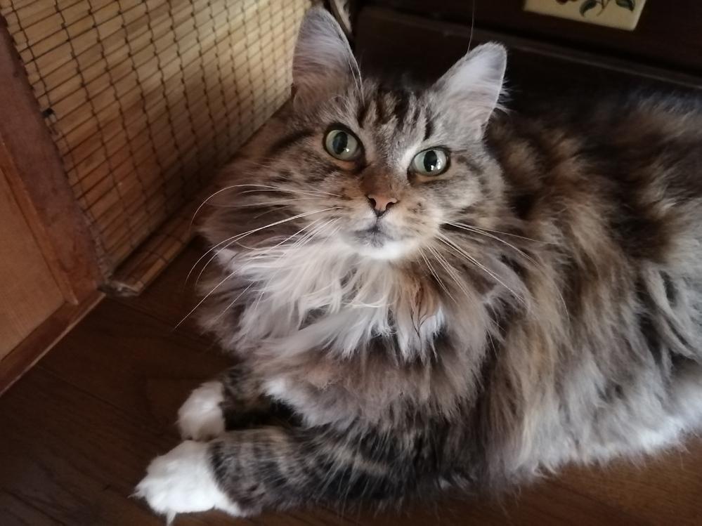 捜し物占いや、霊視、透視など探しものに関して得意な方へぜひご協力お願いします。 12日に室内で飼っていた猫が脱走してしまい見つかりません。今どこでなにをしているのでしょうか。そしてどの辺りの場所を探したらいいでしょうか。よろしくお願いします。