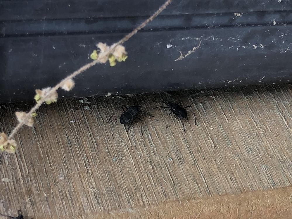 公園にいたこの虫の名前知ってる方がいたら、教えてください。