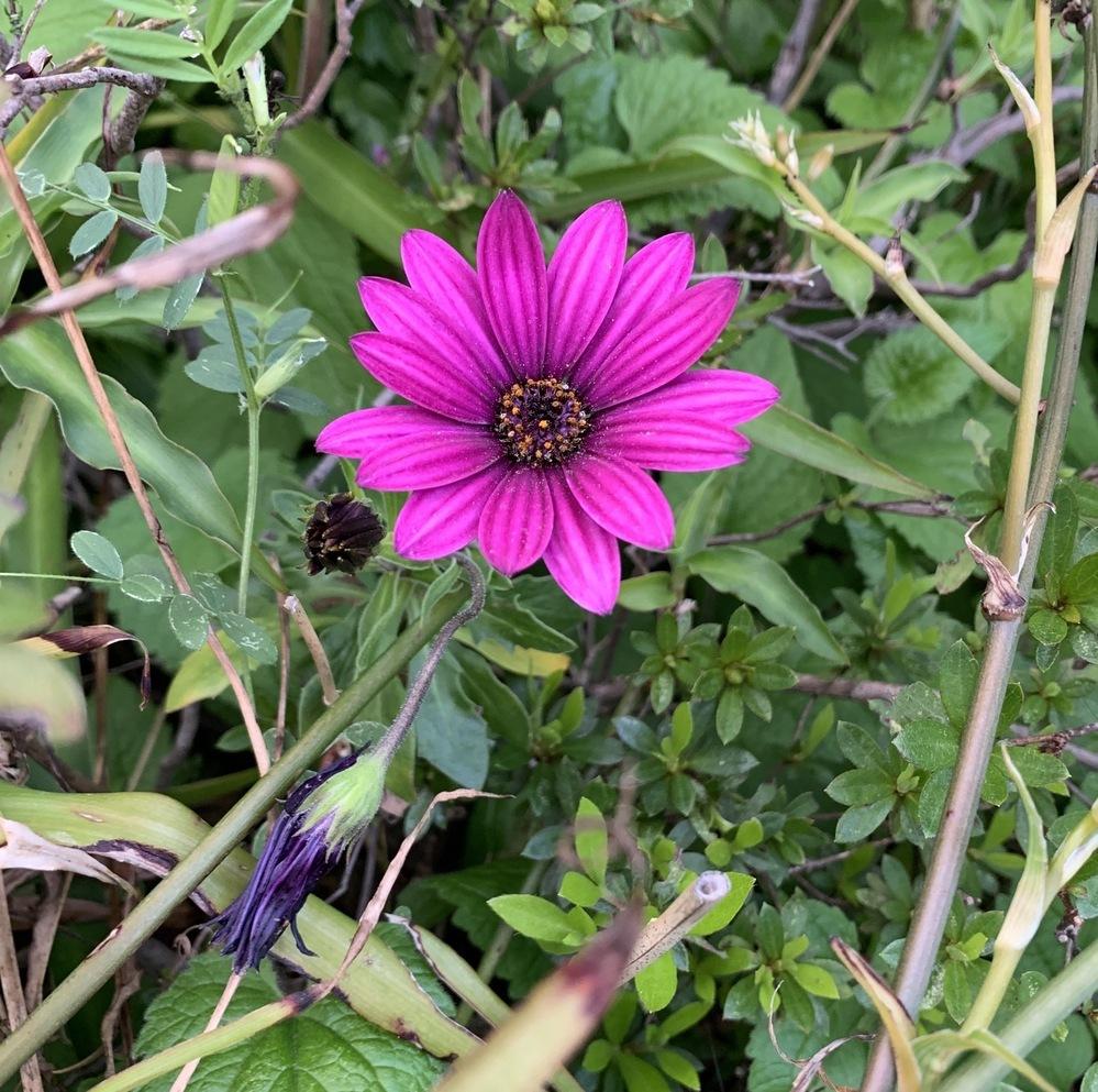 いつもありがとうございます。こちらの写真の花の名前を教えていただけますでしょうか。よろしくお願いします。
