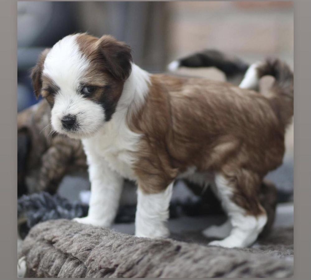 この犬種、おわかりの方いらっしゃいますか?