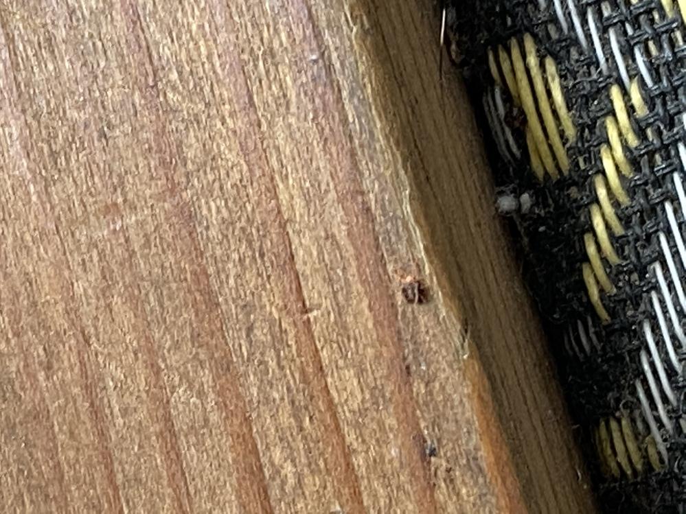この虫が家で大量発生したのですが、調べてもいまいち分かりません 詳しい方この虫の概要を教えてください! (1mmないくらいなので画質悪くてすみません。)