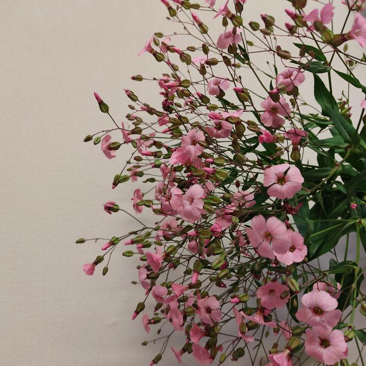 こちらの花の名前が分からないのですがご存知の方いましたら教えてください!
