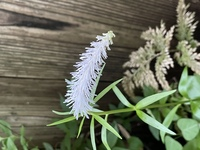 この花はなんでしょうか?