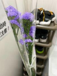 この花の名前と花言葉を教えてください!