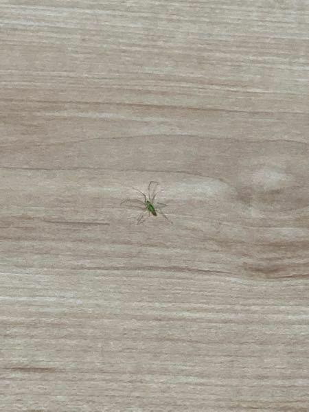 部屋にこんな奴がいたのですがこの虫知ってる方居たら教えてください!