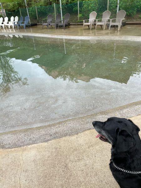 愛犬を泳がせたい。 昨日まで千葉にあるドギーズアイランドというドックプール併設の施設に遊びに行ってきました。 愛犬の10歳の誕生日のお祝いです。 せっかくプールがあるので泳いで欲しかったのですが前足入れただけで後ずさり。。 ラブラドールなので、きっと本能的に泳げると思うのですが、10歳まで1度も泳いだことなければ難しいでしょうか? 去年父が亡くなり父から飼い主が私に変わりましたので、今までの遊び方と変えてみています。 股関節も悪くなりやすいと思うし(モンローウォークしている)、何よりラブラドールは泳ぐのが大好き!なイメージ(先代の子がそうだった)ので出来れば泳いで欲しいのですが。。 今年の夏はドックプールに連れて行きたいのですが飼い主のエゴでしょうか。。 去年の夏も海に行って沖の方から声かけしながらリードを引いたのですが10cmくらいの水位の所から1歩も前に動きませんでした。 こうしたら泳いだよ!といったアドバイスなど頂けましたら幸いです。 よろしくお願い致しますm(_ _)m