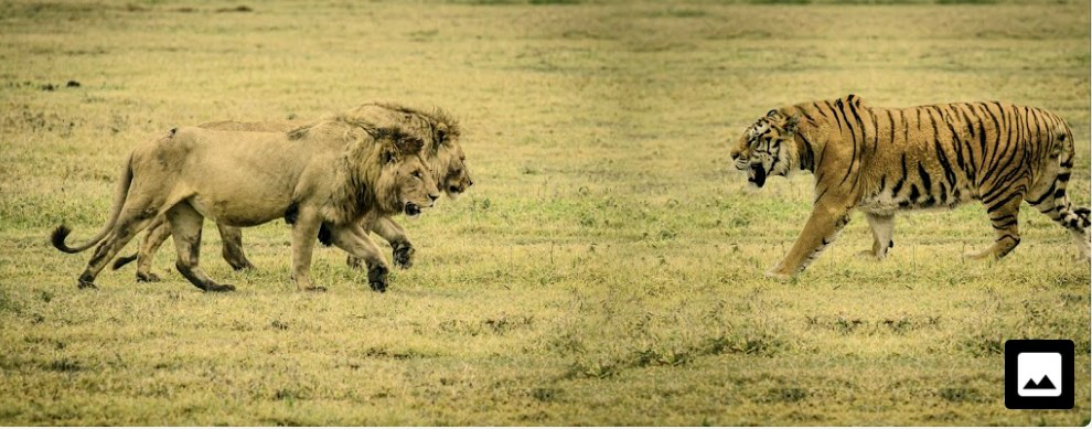 270kgの巨大ゴリラが200kgのベンガルトラに奇襲されたらどうなりますか?