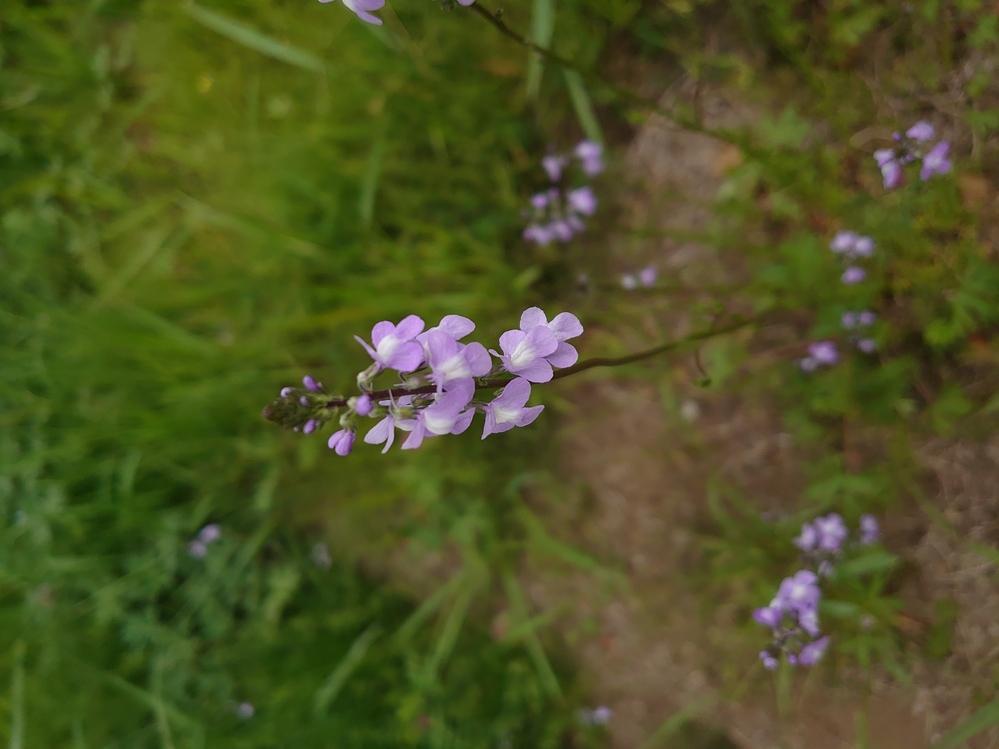 この花の名前はなんでしょうか