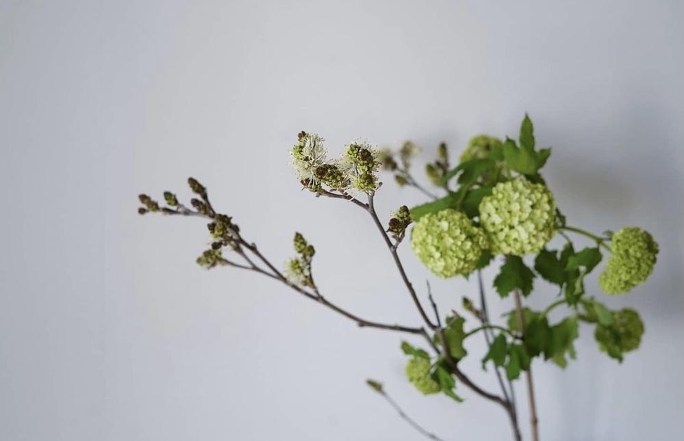 写真のビバーナムの横に出てる 蕾?は何の花か 忘れてしまったので知りたいです 教えてください