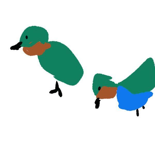 先程河原で写真のような可愛い野鳥を見つけました。いったいなんの鳥でしょうか?絵が下手糞ですみません…翼を広げた時に見える青色の羽毛がとても美しかったです。