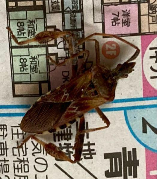 これ何虫ですか? 大きさは2センチくらいで、窓を歩いてました。