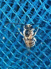 σ(^_^;)? ハチ? 蜘蛛? それとも??? お腹(※背中)を見ると蜂に見えますが 羽がなければ蜘蛛に見えるし、 それにしてはカミキリムシの様な立派な触角…。  これは何でしょうか?