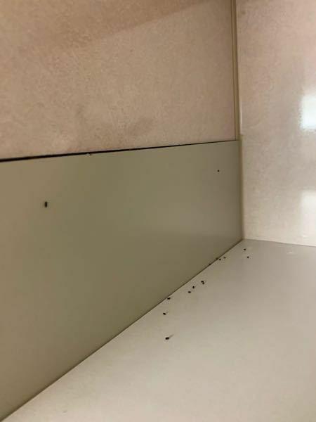 普段使わない、キッチンの高いところにある棚に何かの糞のようなものがたくさんありました(>_<) これはゴキブリの糞でしょうか?