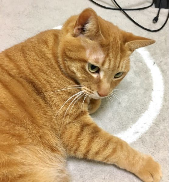 猫ちゃんの可愛さは天下無敵?(=゜ω゜)ノ