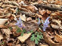 山で会ったこの花の名前はなんですか?