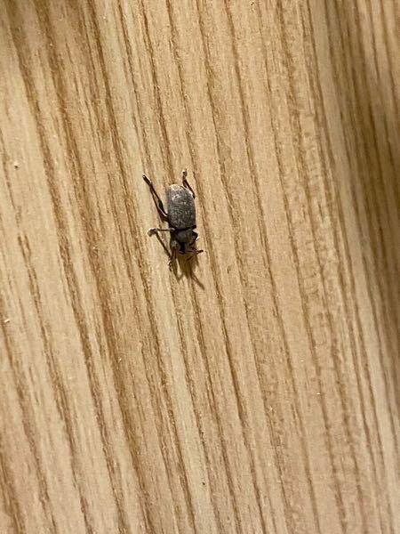 これってなんて虫ですか 画像あり