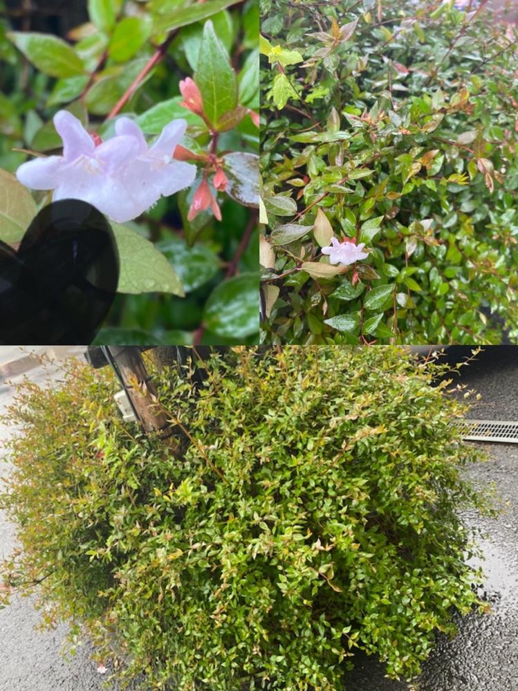 これはなんという植物ですか? 素敵だったのでお名前が知りたいです。 有識の方ご回答よろしくお願い致します。