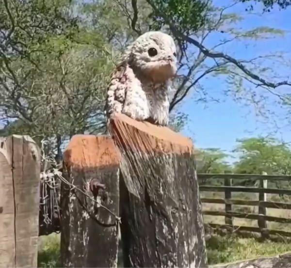 この鳥?なんていう種類ですか?