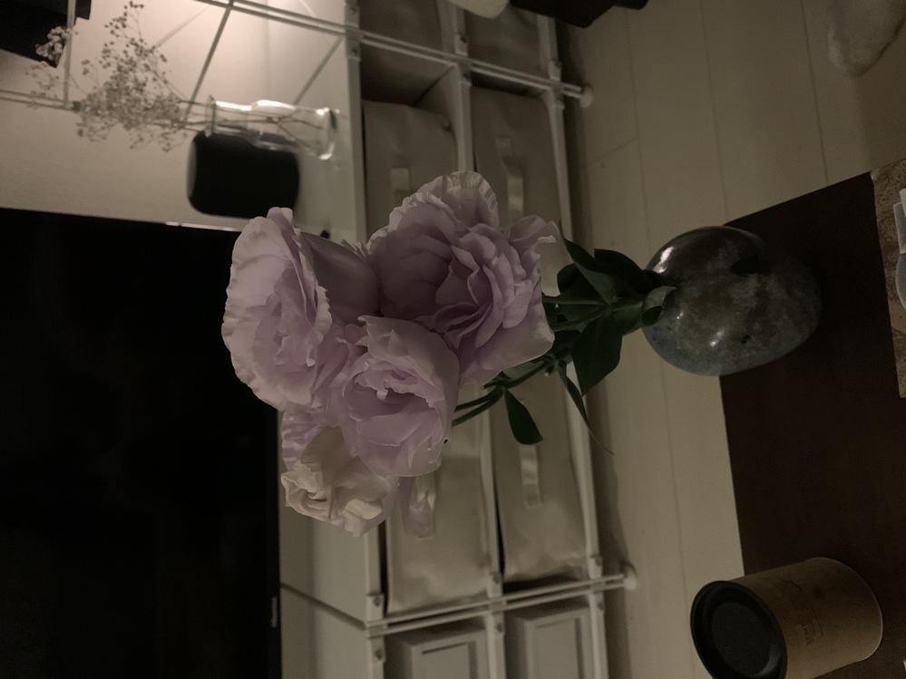 なんて名前の花ですか? お花屋さんで買いました。