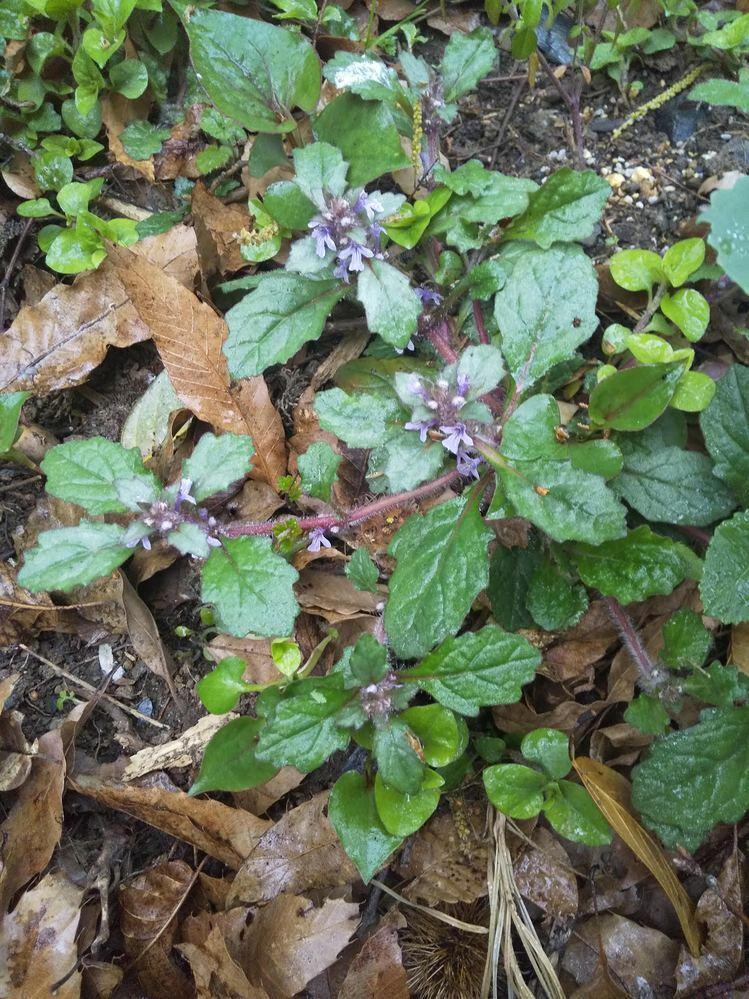 この植物は何という名前でしょうか? (紫色の花が付いています。)