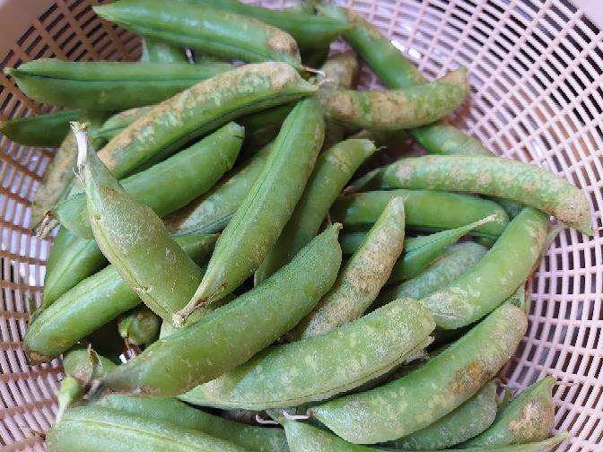 すみません、これは何豆ですか?もらった時にウイ豆とか言ってた気がします。