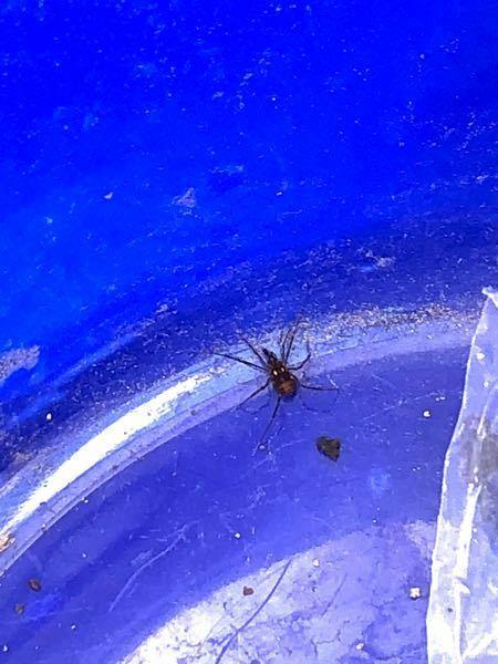 このクモ、初めて見たのですが、わかる方、教えていただけませんでしょうか。