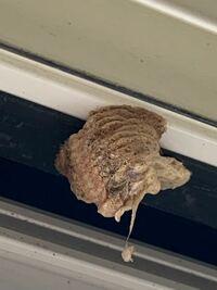これは蜂の巣ですか?5cmくらいです。 どうしたら良いですか?!