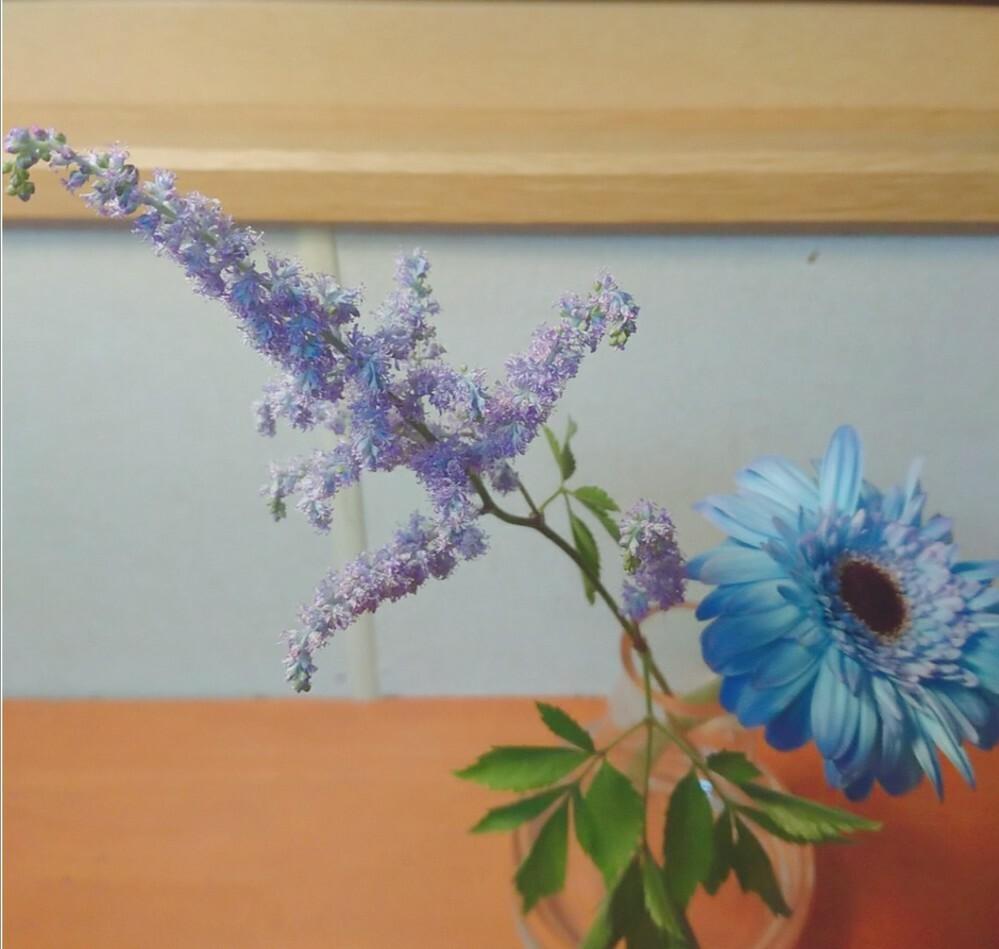 紫色の方のお花の名前を教えてください。先日お花屋さんで買ったのですが名前が思い出せません。 写真でお花を検索できるアプリでも探しましたがどれも違いました。
