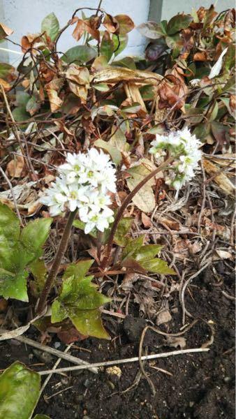 この白い花の名前はなんでしょうか?
