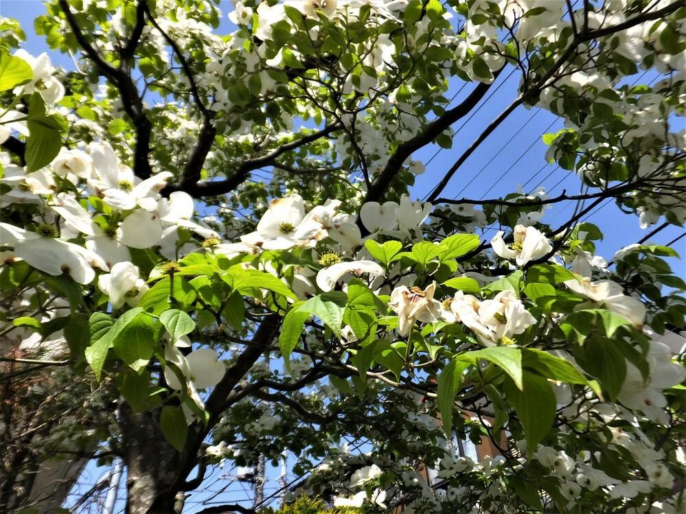 この木の花教えて下さいb