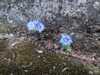 これは何という植物ですか