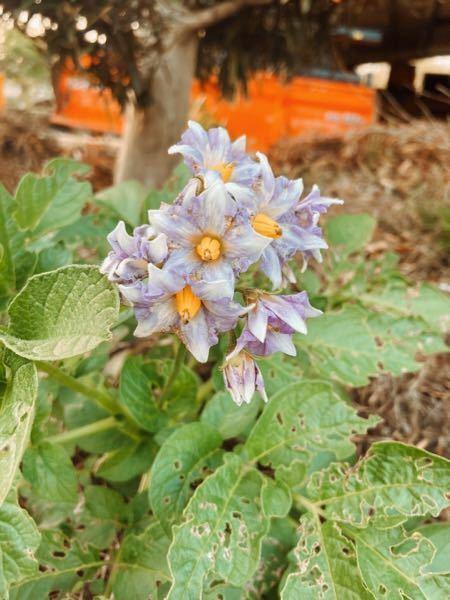 この花はなんと言いますか? 多少虫に食われていて見にくいですが…