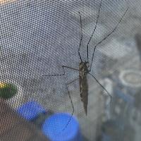 家の窓に虫が大量発生しています。川が近くにあります。 これはなんですか? 駆除方法などあるでしょうか? 知っている方おりましたら教えてください、お願いします。