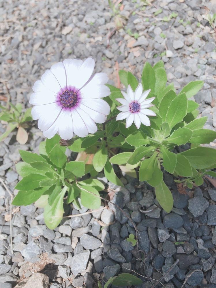 この花の名前はなんというんですか?