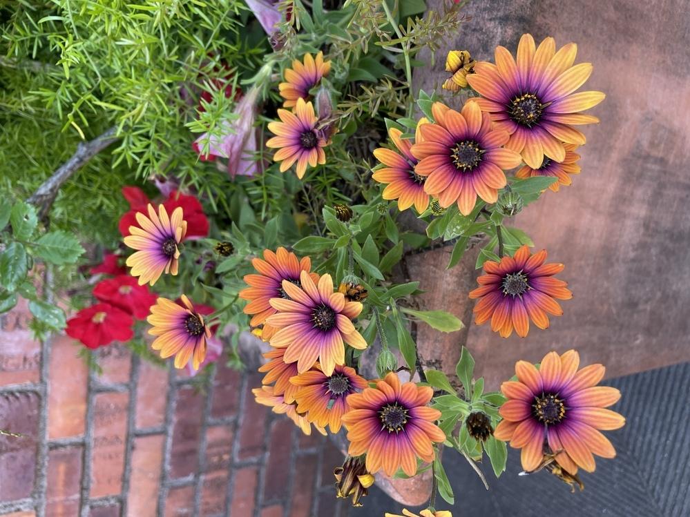 この花の名前わかる方いたら教えて下さい。