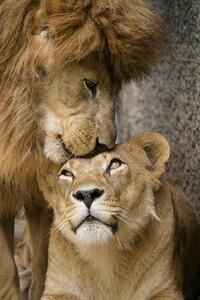 動物好きの方は、いらっしゃいますか?  どんな動物が、お好きですか?
