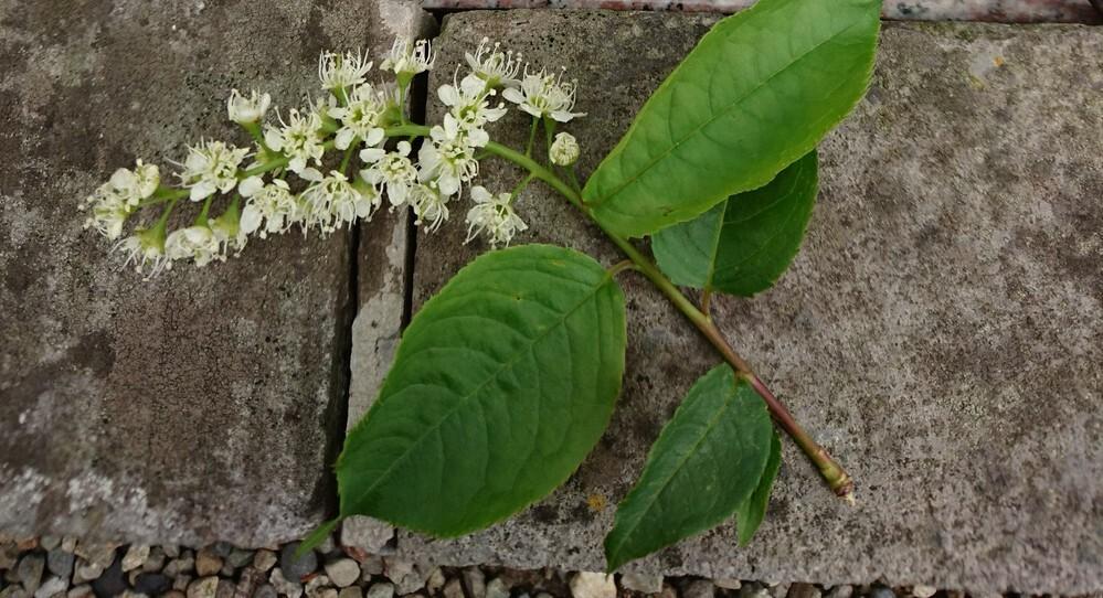 こんにちは。 この花の名前を教えて下さい。 どうぞ宜しくお願い致します。