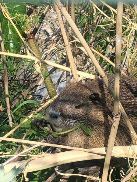 これは何という動物でしょうか? 体長は20〜30センチ、尾は長かったです。