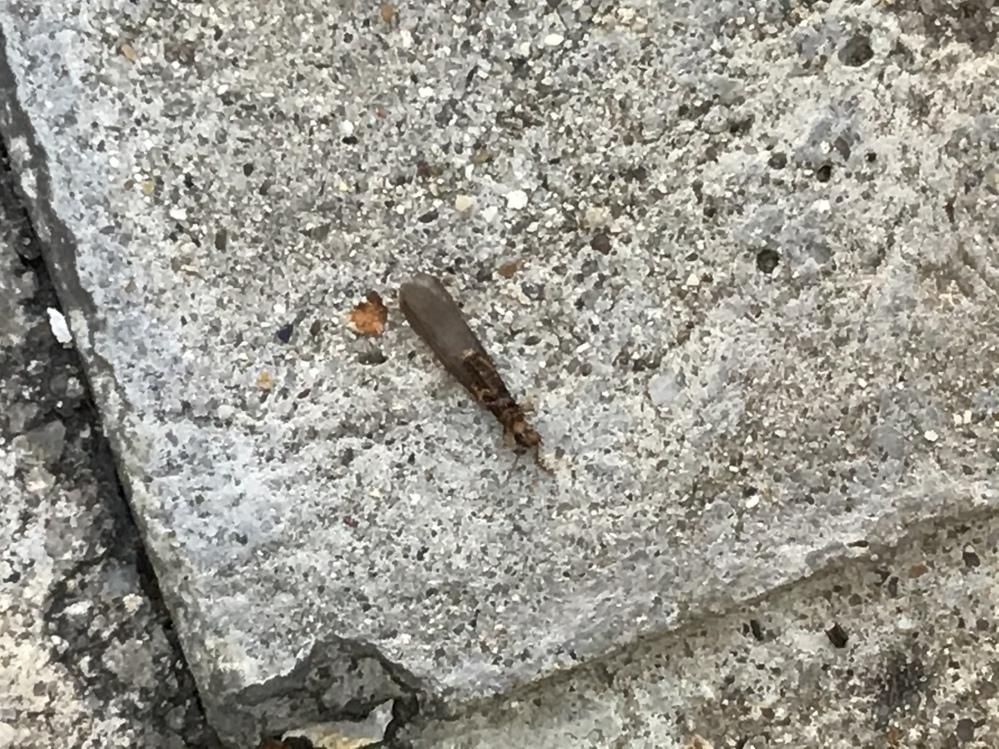 この虫なんという虫でしょうか? 分かる方いれば被害とかも教えて頂ければ幸いです。