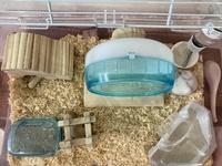 パールドワーフハムスターを飼っています。 飼い始めて2ヶ月ほどですが、 最近巣箱の前におしっこをする様になってしまいました。 ルーミィを使っているので 水飲み器の位置が2か所しか選べず 巣と反対側にトイレがおけません。 対角線上にトイレをおいて、 巣箱の前に砂浴び用の砂にしていたのですが 砂浴び用の砂におしっこをしてしまうので トイレと砂浴びの場所を交換しました。 しばらく...