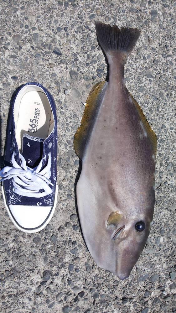 この魚はナンですか? 食べられますか??